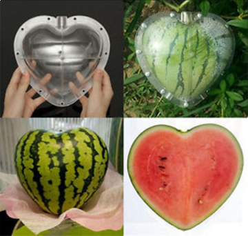 Vegetable and Fruits SHAPER